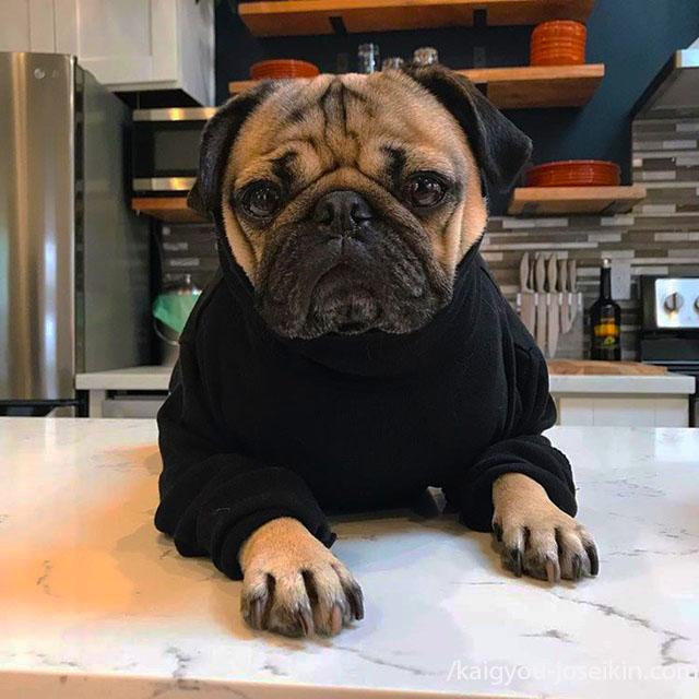 หมาประเภทไหน