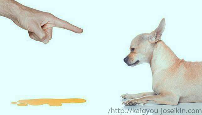สอนหมาให้ฉี่