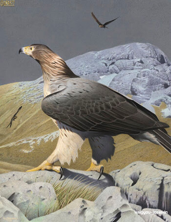 Haast s eagle