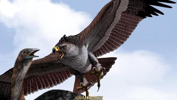 Haast s eagle 2